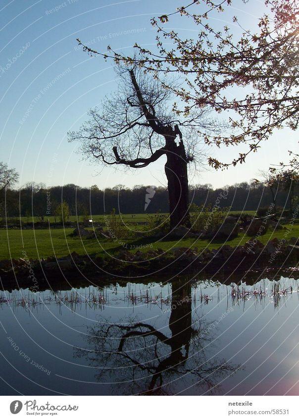 Alt wie ein Baum Eindruck
