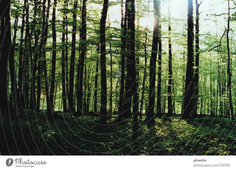 frÜhlingsgefÜhle Himmel Baum Sonne grün Blatt Wald Frühling Bodenbelag Ast Blühend Jahreszeiten Baumstamm aufwachen
