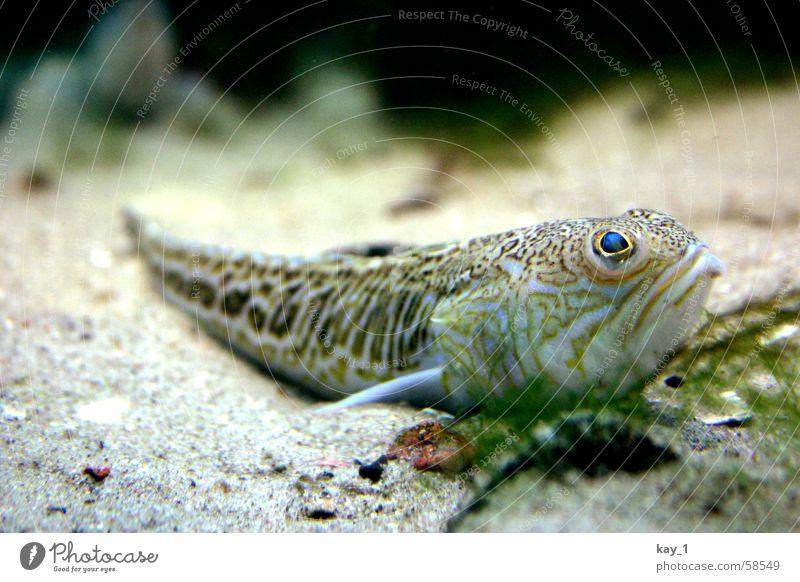 fisch-siesta Meer Fisch Aquarium Unterwasseraufnahme