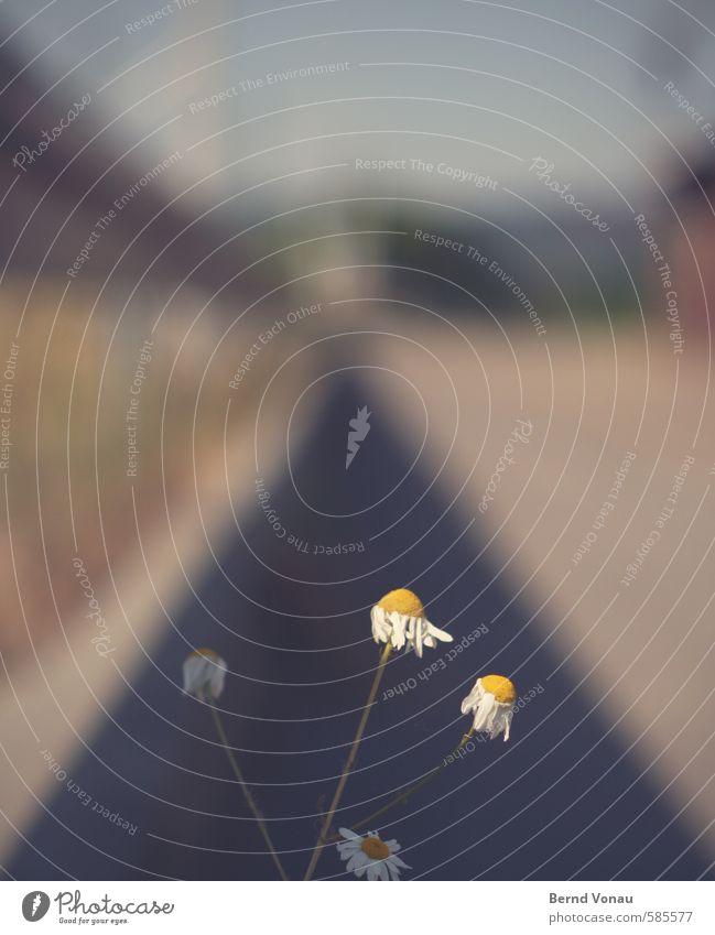 Fernweh Straße Leitplanke blau braun gelb grau grün silber weiß Fluchtpunkt zerzaust schutzlos Wachstum Einsamkeit Stadt Ferne streben gefährlich Dreieck Linie