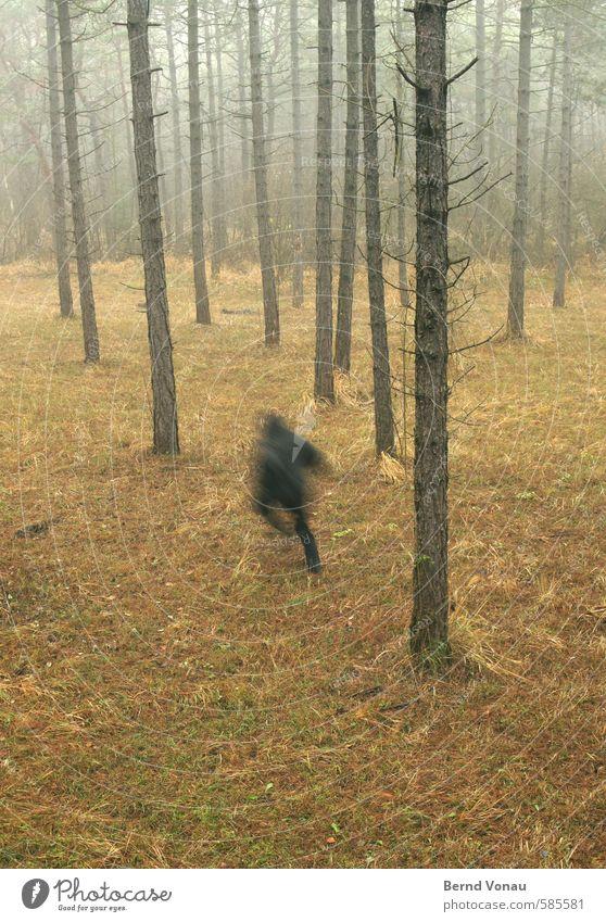 Run Forest !! Mensch 45-60 Jahre Umwelt Natur Herbst Pflanze Baum Wald braun grau grün schwarz Flucht laufen Kapuze Jacke rennen Kiefer geheimnisvoll Bewegung