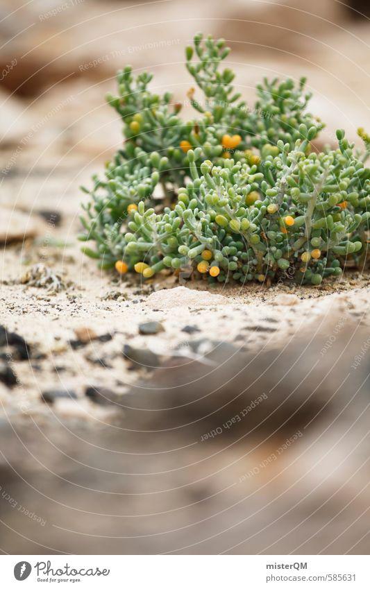 I.love.FV XXXVII Umwelt Natur Pflanze ästhetisch Zufriedenheit Fuerteventura Spanien grün Wüste Steinwüste trocken Wachstum Farbfoto Gedeckte Farben