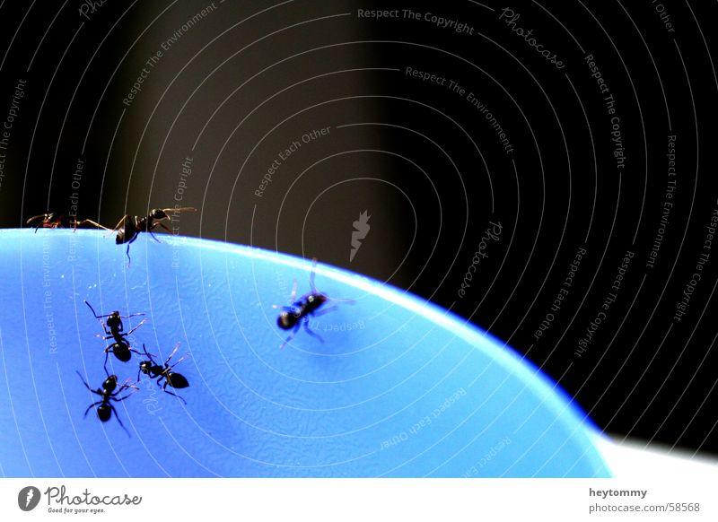 Das kleine Krabbeln I Ameise Becher Becherrand Insekt Am Rand Tier Klettern krabbeln wimmeln Makroaufnahme Detailaufnahme blau Gefäße Außenaufnahme