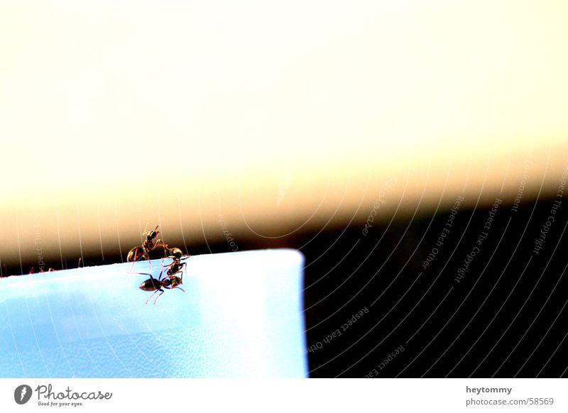 Das kleine Krabbeln II Tier Klettern Insekt Am Rand steigen krabbeln Becher Bildausschnitt Gefäße Anschnitt Ameise Becherrand