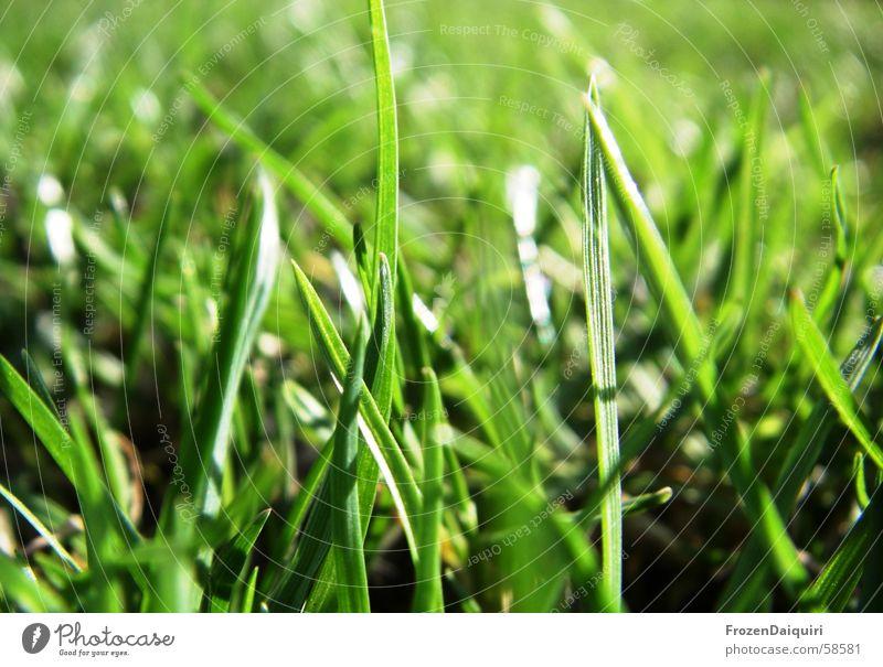 Grasgrün schön Sonne dunkel gelb Wiese Frühling hell frisch Fröhlichkeit Rasen Halm