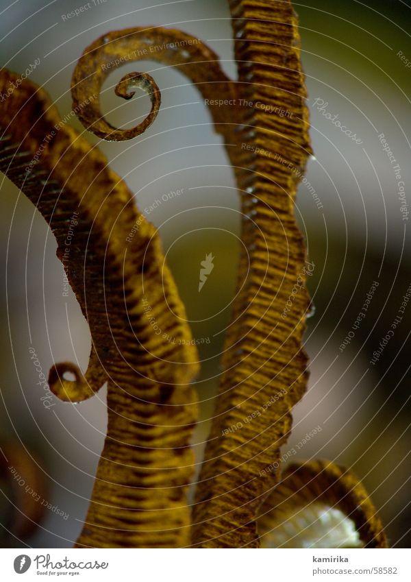 schienenspan die 3te Natur Pflanze Metall Eisenbahn Gleise Rost Hobel fossil