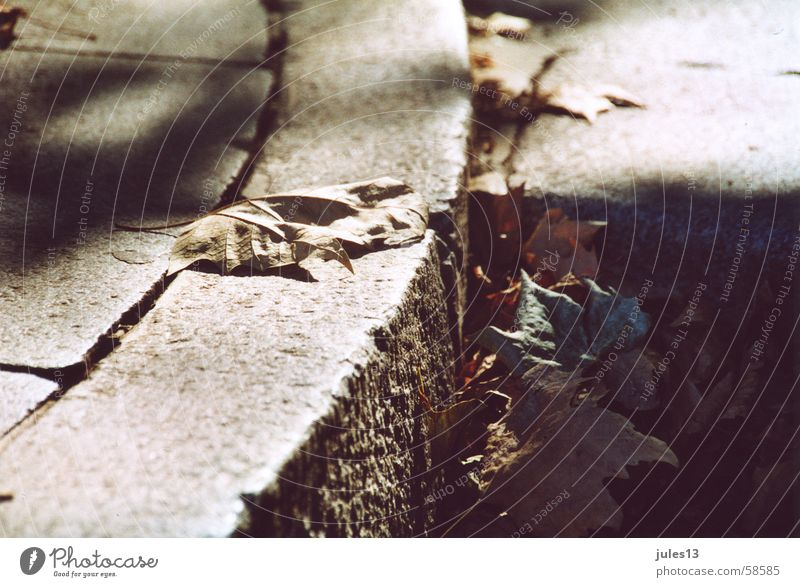 herbst Herbst Jahreszeiten Blatt welk Bordsteinkante Licht Ecke bürgesteig Schatten Bodenbelag Stein Anschnitt Perspektive Außenaufnahme