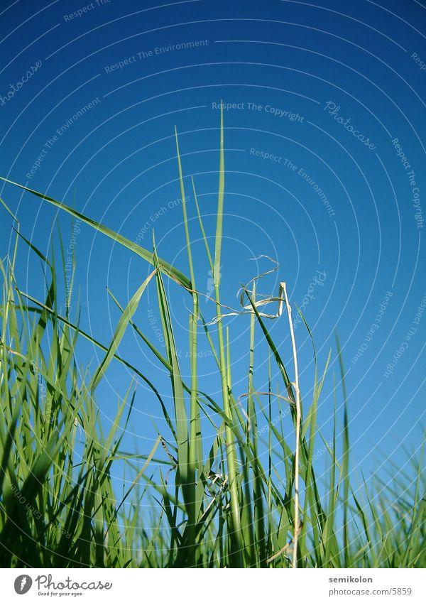 summerfeeling Gras grün Hochformat Halm Himmel blau Makroaufnahme Bodenbelag