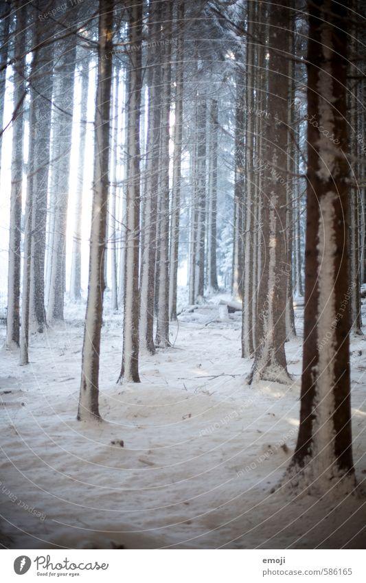 in Reih und Glied Umwelt Natur Landschaft Winter Schnee Baum Wald kalt natürlich Farbfoto Gedeckte Farben Außenaufnahme Menschenleer Tag