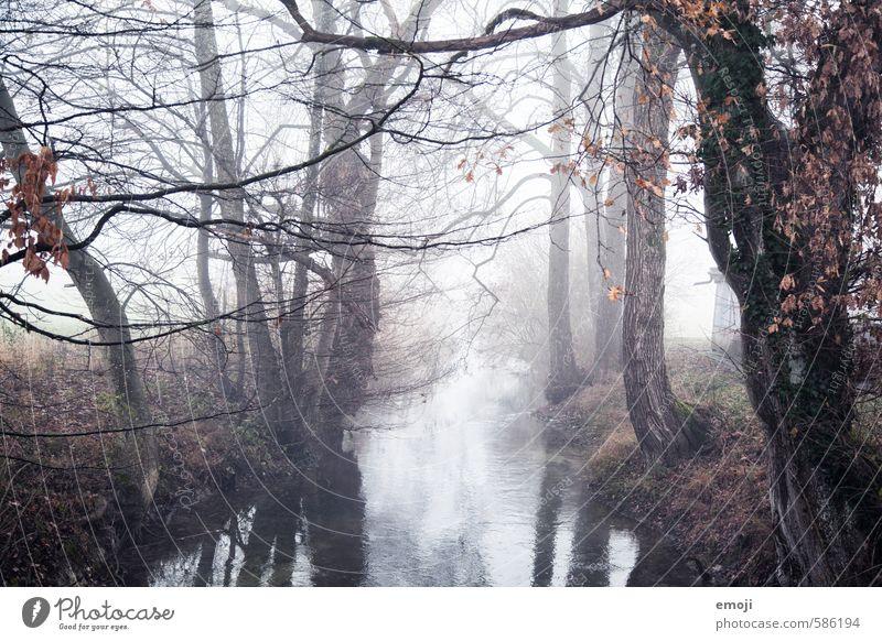 fall Umwelt Natur Landschaft Herbst schlechtes Wetter Nebel Baum Bach Fluss dunkel gruselig grau Farbfoto Gedeckte Farben Außenaufnahme Menschenleer Tag