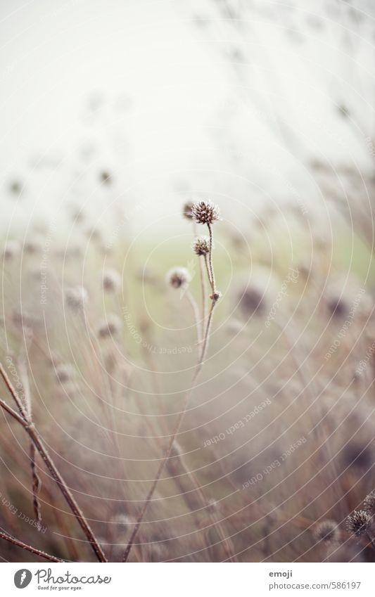 sanft Natur Pflanze Blume Umwelt grau natürlich Feld weich