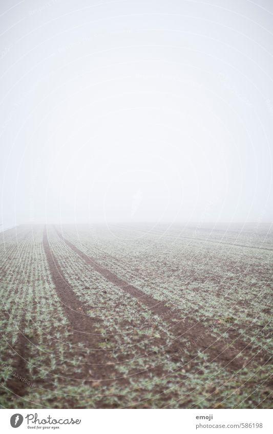 Tristesse Umwelt Natur Landschaft Herbst schlechtes Wetter Nebel Feld natürlich grau grün Farbfoto Gedeckte Farben Außenaufnahme Menschenleer Textfreiraum oben
