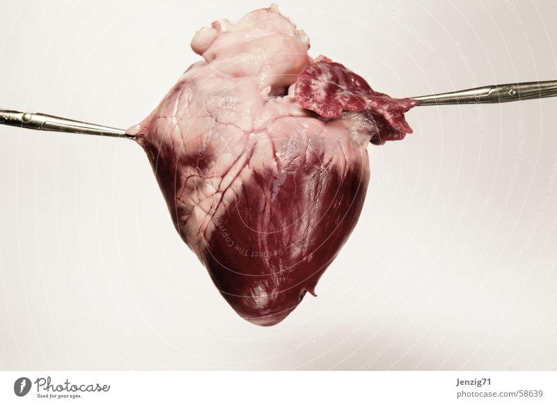 Herzschmerz. Schmerz Fleisch Schwein roh Klemme Organ