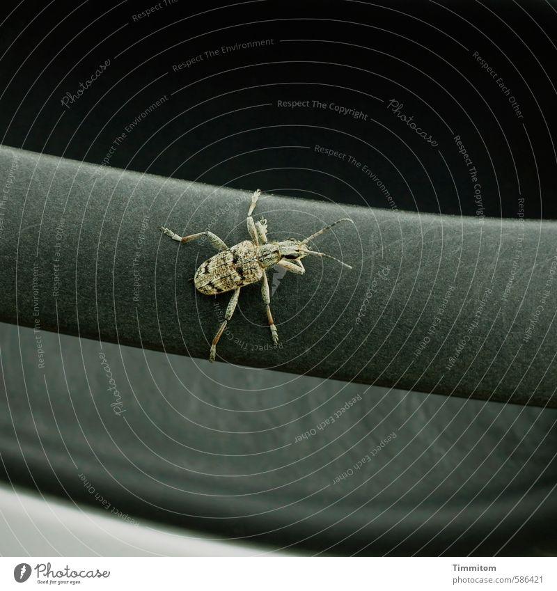 Verfallsdatum überschritten | So fürchte ich. Tier schwarz grau natürlich Beine festhalten Kunststoff Insekt Griff Fühler