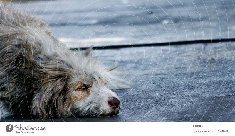 Die unendliche (todes)Geschichte alt Ferien & Urlaub & Reisen Tier Hund Haare & Frisuren Traurigkeit Beton Trauer Südamerika Chile