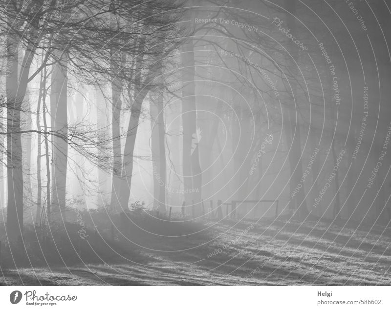 Dezembermorgen II Umwelt Natur Landschaft Pflanze Winter Nebel Eis Frost Baum Gras Wiese Wald Hügel Zaun Zaunpfahl leuchten stehen ästhetisch außergewöhnlich