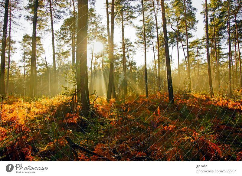 Licht und Schatten Natur Ferien & Urlaub & Reisen Pflanze Sonne Baum Landschaft Blatt Wald Umwelt Gefühle Herbst Schule Stimmung Freizeit & Hobby Tourismus wandern