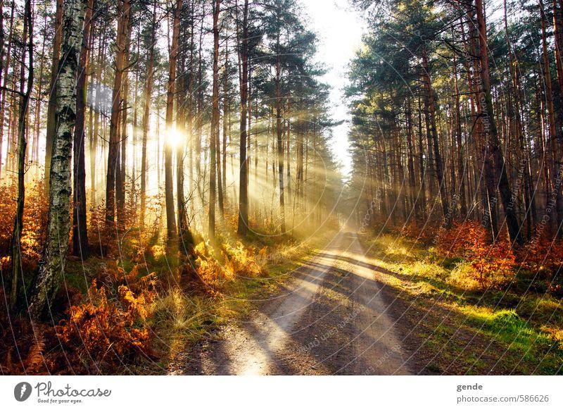 Sonnenstrahlen über dem Weg Umwelt Natur Landschaft Pflanze Erde Sonnenlicht Herbst Klima Wetter Schönes Wetter Baum Gras Sträucher Moos Blatt Grünpflanze