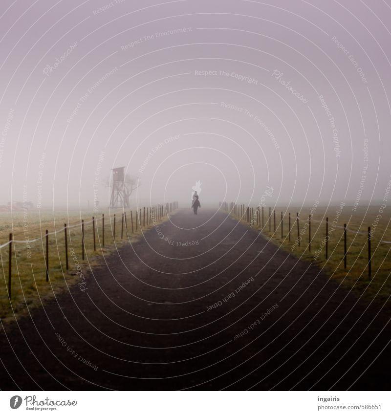 Ritt ins Ungewisse Reiten 1 Mensch Landschaft Himmel Winter Klima Wetter Nebel Feld Wege & Pfade Tier Nutztier Pferd Bewegung Unendlichkeit kalt trist grau grün