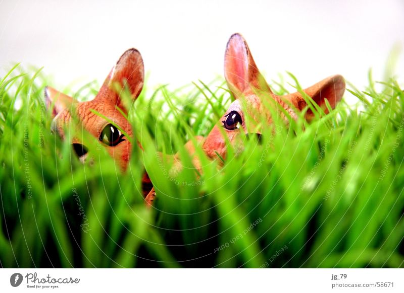 Versteckte Löffel Hase & Kaninchen Gras Wiese grün braun Keramik Tier Ostern Frühling Schnauze Fell Suche Nest 2 bunny Rasen Statue Kitsch easter Feste & Feiern