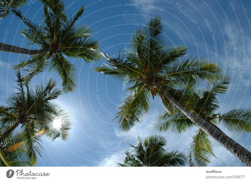 Karibiktraum Palme Ferien & Urlaub & Reisen Guadeloupe Sommerurlaub Kuba Himmel Sonne