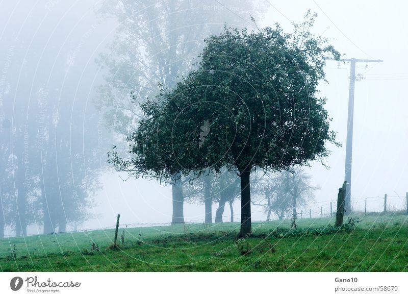 Eifelnebel Baum grün Wiese Stimmung Nebel Apfelbaum