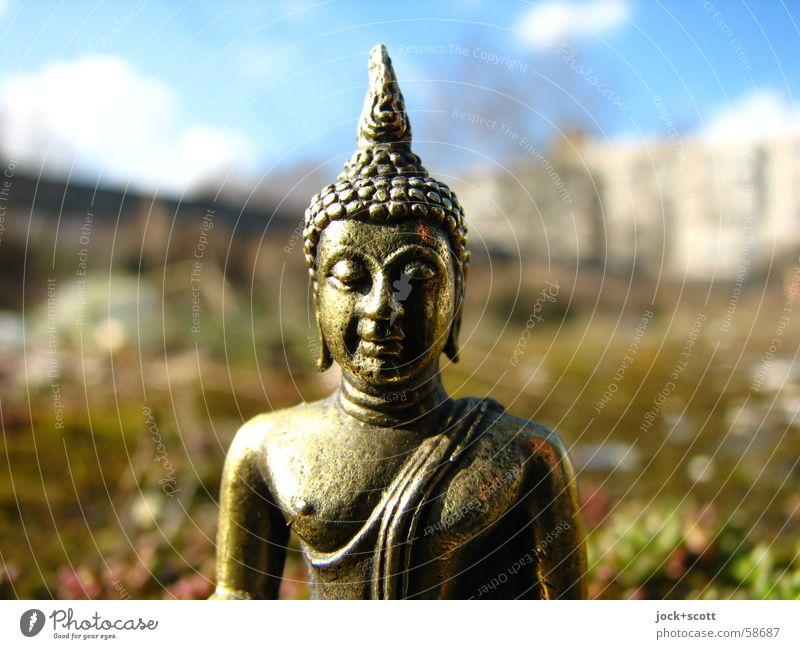Buddha im Moos Mensch Himmel Erholung ruhig Glück Denken Religion & Glaube Idylle Kraft gold niedlich Schönes Wetter Verstand Buddhismus harmonisch exotisch
