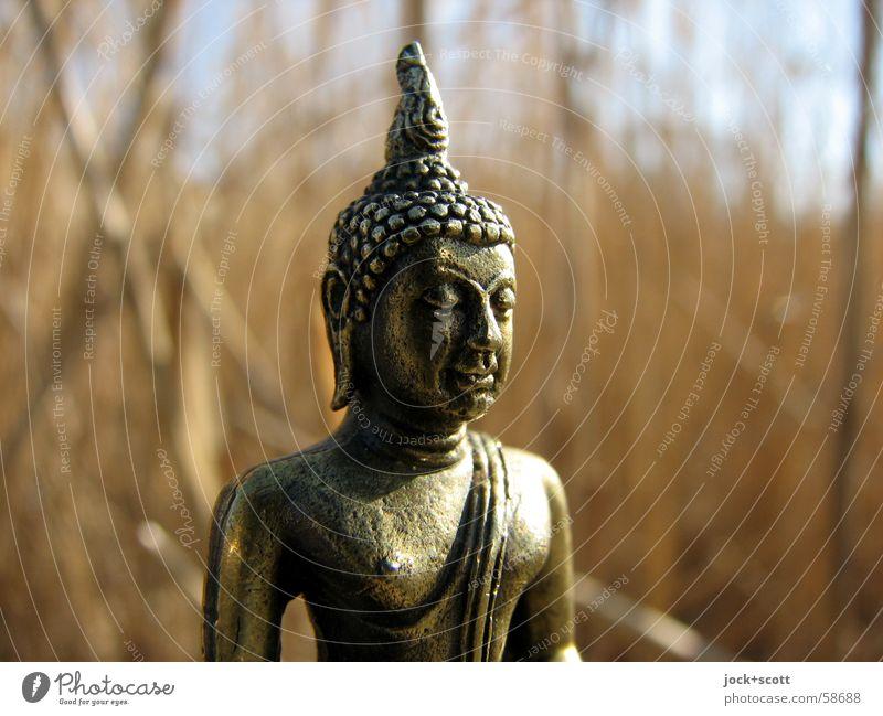 Buddha im Schilf Mensch Himmel Pflanze Gesicht Glück Denken Religion & Glaube Kraft gold niedlich Schönes Wetter Vertrauen Schilfrohr Meditation machen
