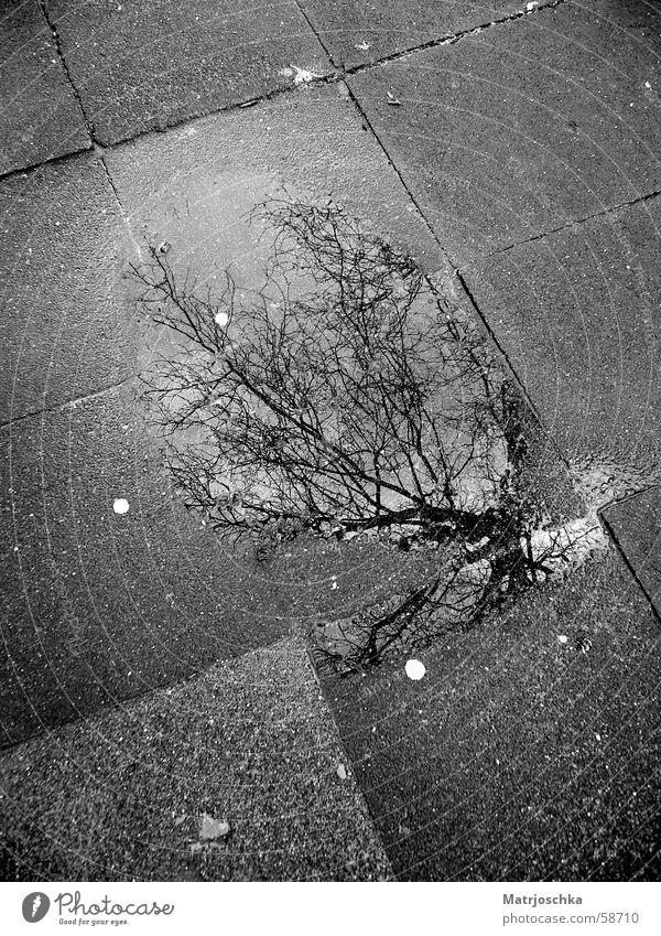 grauer Pfützenbaum Baum Reflexion & Spiegelung Wolken Straße