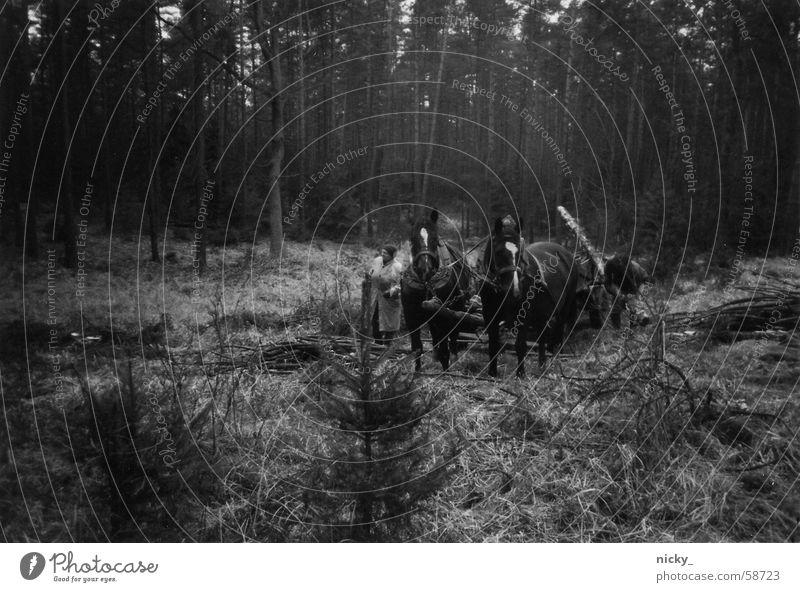 drauß vom walde kommen wir her Mann alt weiß Winter schwarz Wald dunkel Holz Traurigkeit Arbeit & Erwerbstätigkeit bedrohlich Pferd gruselig Sammlung Kanada