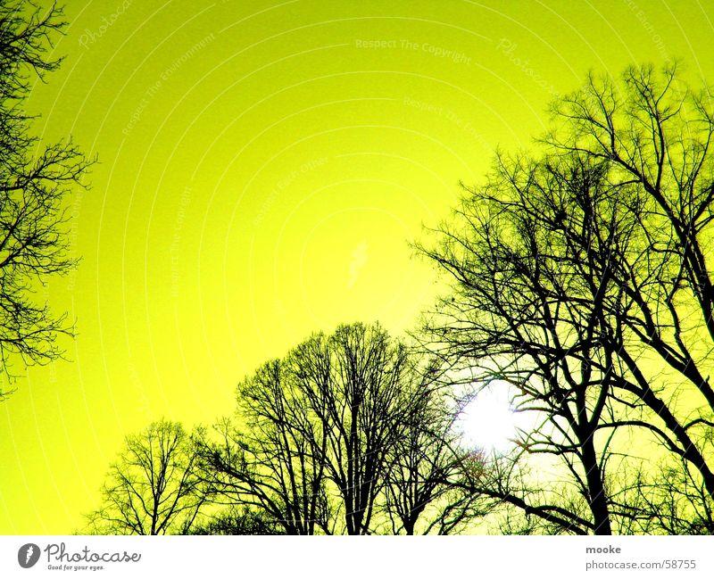 Yellow Sky Himmel Baum Sonne schwarz gelb