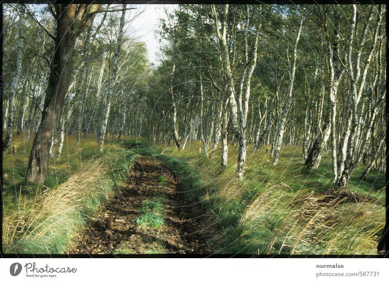kommt mit Sinnesorgane Erholung ruhig Freizeit & Hobby Ferien & Urlaub & Reisen Ausflug Joggen wandern Yoga Natur Pflanze Tier Frühling Klima Baum Birkenwald