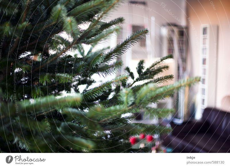 es weihnachtet Lifestyle Häusliches Leben Raum Wohnzimmer Feste & Feiern Weihnachten & Advent Winter Tannenzweig Weihnachtsbaum stachelig grün Gefühle Stimmung