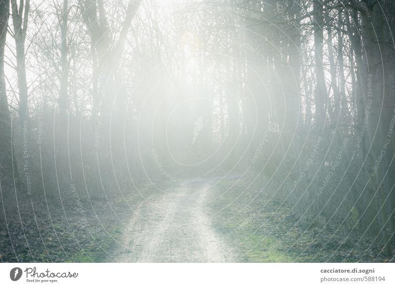 Morgenspaziergang schön grün weiß Einsamkeit Landschaft ruhig schwarz Wald Traurigkeit Gefühle Herbst Wege & Pfade grau natürlich außergewöhnlich träumen