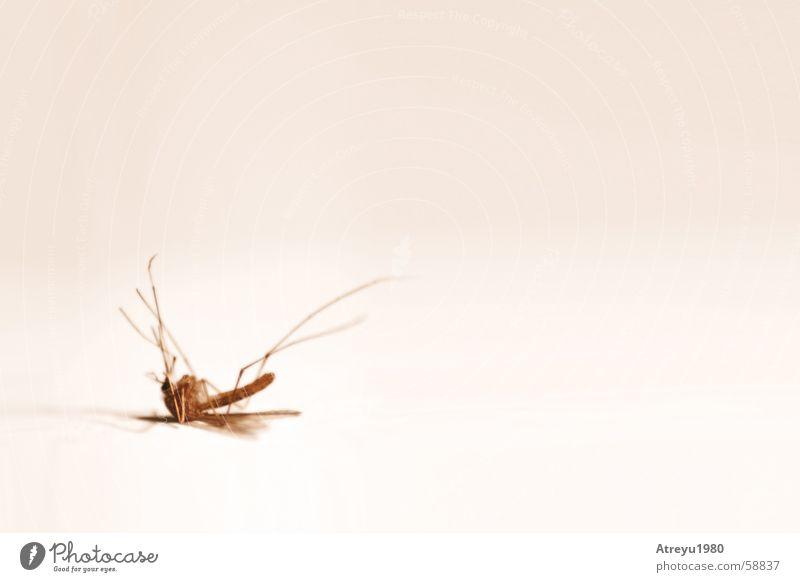 ..klinisch tot Sommer Tod Beine hell Rücken leer Flügel Insekt stechen Stechmücke Plage