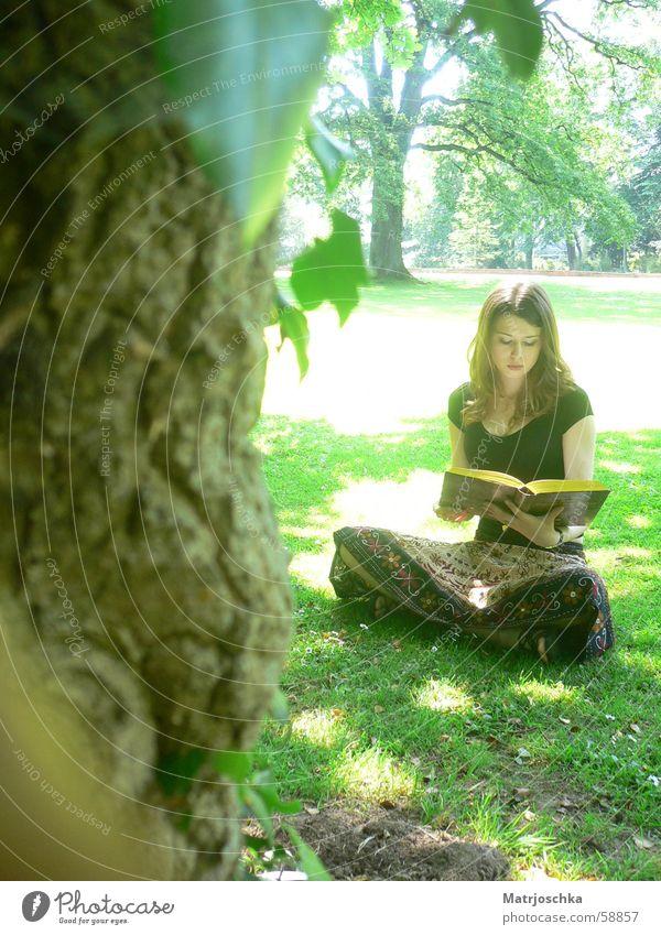 natürliche Lesefreude Frau Natur grün schön Baum Sonne Blatt Erwachsene Wald Erholung Gras Wärme Frühling Denken Park braun