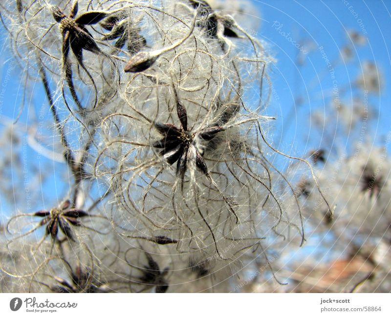 am Ende / am Anfang einer Pflanze Frühling Sträucher Blüte Park verblüht authentisch dünn natürlich Wärme grau Stimmung Hoffnung Trauer Verfall Vergänglichkeit