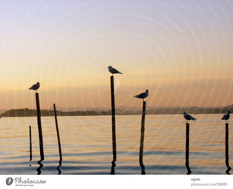Schattengestalten Sonne Vogel See Sonnenuntergang Insel Reichenau Sommer gelb rot Tier Wasser Bodensee Pfosten möven Himmel blau Abend