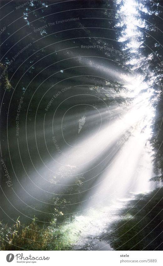 Wadlichtung mit Sonneneinstrahlung Wald Waldlichtung