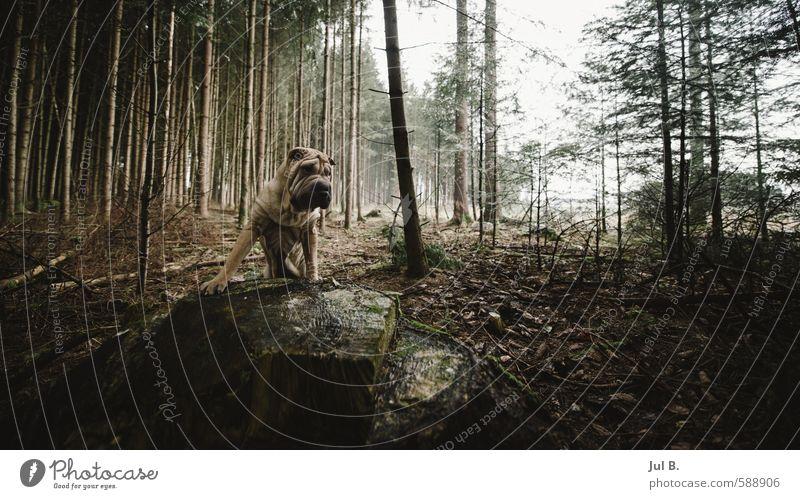 Gefährlich Hund Himmel Natur Pflanze Sonne Baum Freude Tier Umwelt Glück hell Luft gut