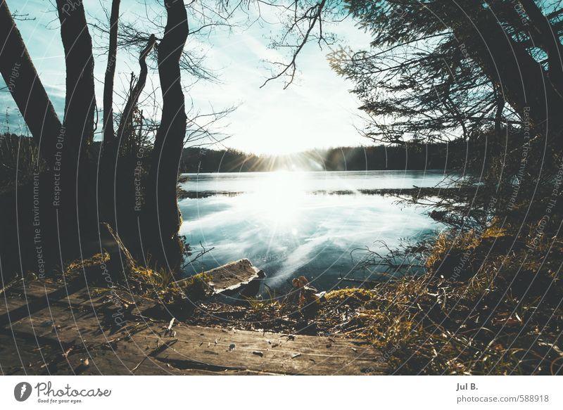 Wald, Wasser Sonne Natur Sonne Landschaft Freude Umwelt Gefühle Stimmung Schönes Wetter gut Bayern