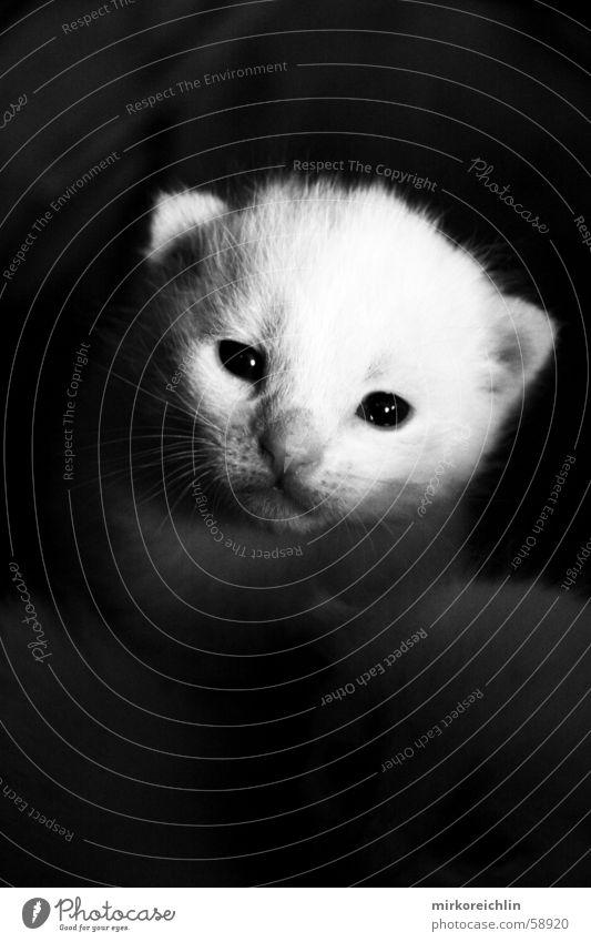 Was kuckst du? weiß schwarz Katze ernst herzlich