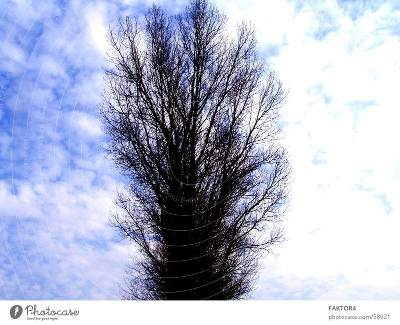 Feel Alone Wolken Baum dunkel Himmel blau Einsamkeit Wetter Natur Gewitter regen.