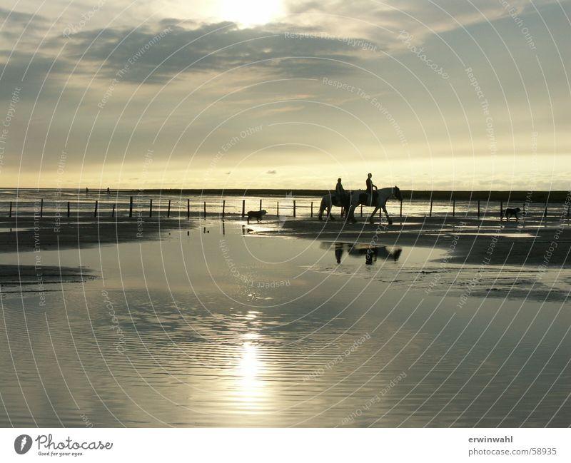 Sonnenuntergang Nordsee Pferd Landschaft Gegenlicht
