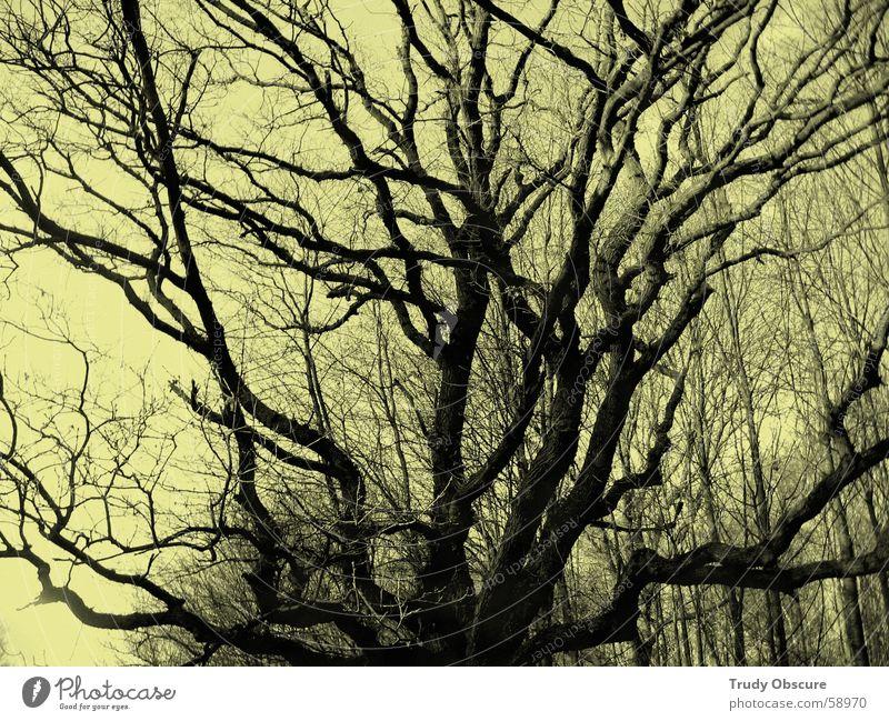 under the pipal tree Reichweite Aussicht Baum Wald Geäst Baumkrone Synthese laublos Unterholz Erde Himmel Ast astwerk