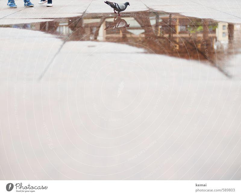 Spiegelungen | Vogelbad Kind Fuß 2 Mensch Wasser Stadt Schuhe Tier Wildtier Taube 1 Asphalt Pfütze Linie Bodenplatten stehen spiegeln Farbfoto Gedeckte Farben