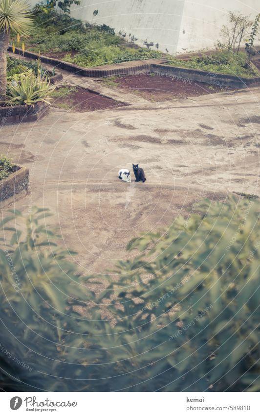 Let's meet in open space Umwelt Erde Pflanze Sträucher Palme Garten Park Tier Haustier Katze Fell 2 Erholung liegen sitzen Wachstum braun grün Freundschaft