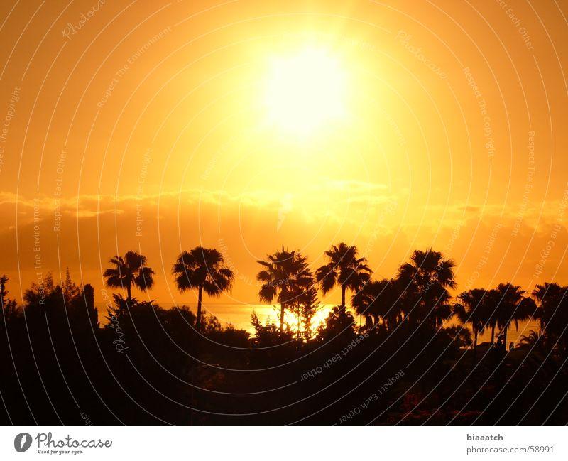 canary sunrise Palme Sonnenaufgang Sonnenuntergang Ferien & Urlaub & Reisen Kanaren Meer Sommer Himmelskörper & Weltall Morgen holiday