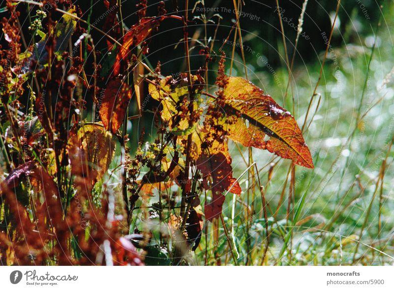 autumn Herbst Blatt Natur Schönes Wetter