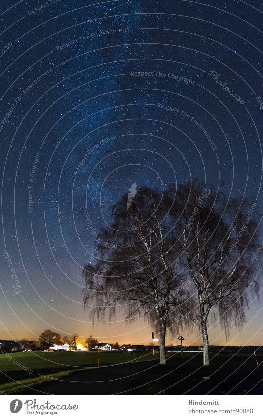 Vorweihnachtssternenhimmel Winterurlaub Himmel Wolkenloser Himmel Nachthimmel Stern Horizont Baum Birke Wiese Feld Dorf Straße Wege & Pfade glänzend leuchten